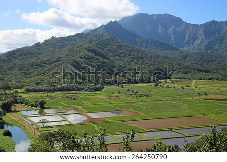 Taro Fields - Kauai, Hawaii - stock photo
