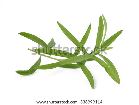 Tarragon (Artemisia dracunculus)  isolated on white background