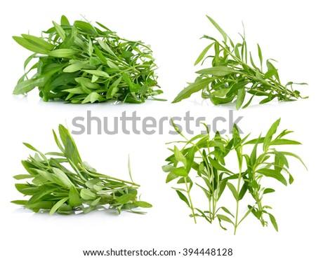 Tarragon herbs on white background - stock photo