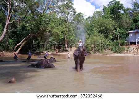 TASIK KENYIR , MALAYSIA - 2015 February 5 : Man guard elephant in presentation bath in river .the Elephant Orphanage Sanctuary in, Terengganu, Malaysia.  - stock photo