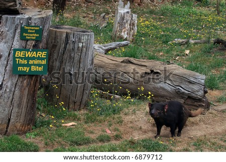 Tasmanian Devil and Sign - stock photo