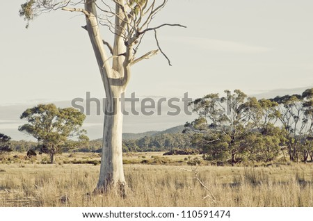 Tasmanian landscape with eucalyptus trunk in pasture - artistic rendition - stock photo