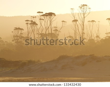 Tasmanian temperate rain forest - stock photo