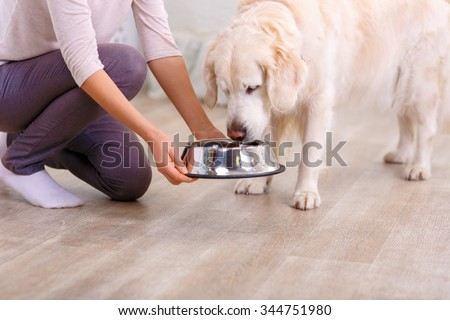 Taste it. Close up of bowl with food in hands of pleasant caring woman holding it while feeding her dog - stock photo