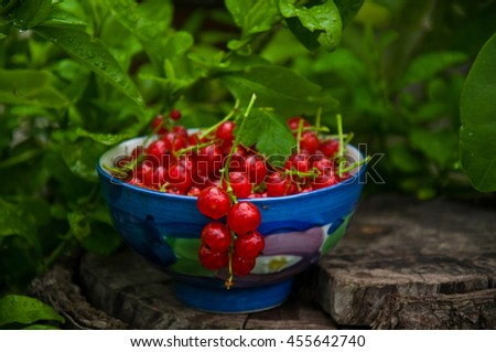 tasty red currant summer waits eat her