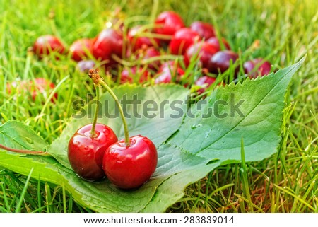 Tasty ripe cherries on grass - stock photo
