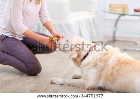 Tasty staff for you. Close up of bone in hands of caring woman holding it and feeding the dog while having fun sitting on the floor