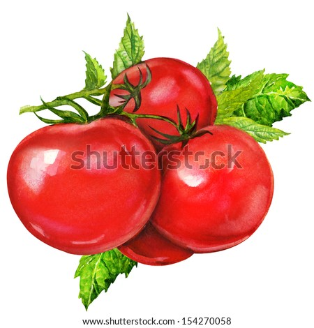 tasty tomatoes, watercolor painting on white background - stock photo
