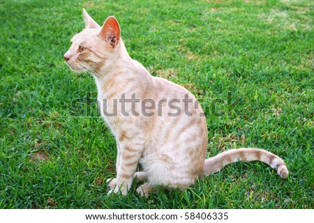 Tawny cat on green grass. - stock photo