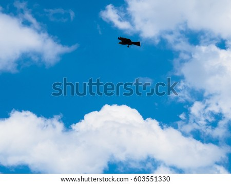 Tawny eagle bird hovering in the blue sky with white cloud and determined eyes