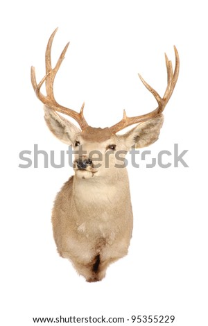 Taxidermy mount of a mule deer (odocoilus hemionus) - stock photo