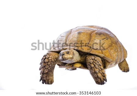 Taxidermy Turtle On White Background