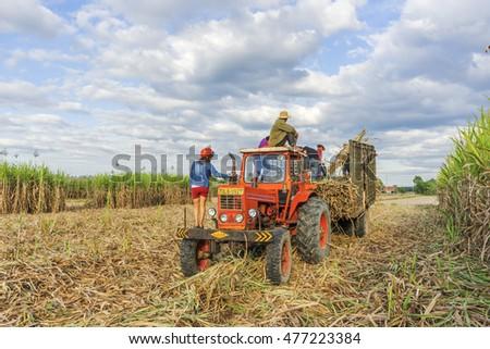 TAY NINH, VIETNAM - NOV 25, 2014:Sugar cane harvest in Tay Ninh, Vietnam