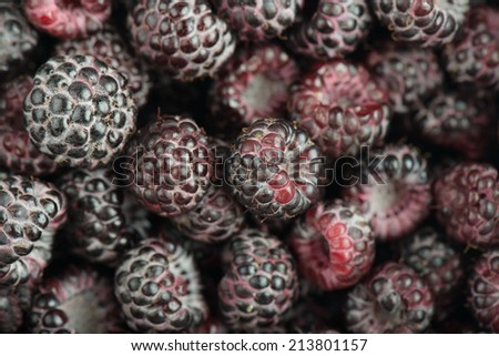 Tayberry a hybrid of raspberries and blackberries