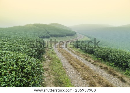 Tea hills at the early morning with heavy fog in Moc Chau highland, Son La province in Vietnam - stock photo