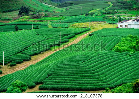 Tea hills in Moc Chau highland, Son La province in Vietnam  - stock photo