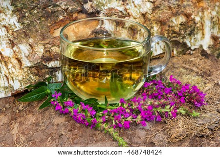 Tea or infusion of lythrum salicaria or purple loosestrife used in naturopahie medicine a an hepatoprotective and antidiabetic healing plant.