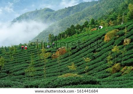 tea park - stock photo