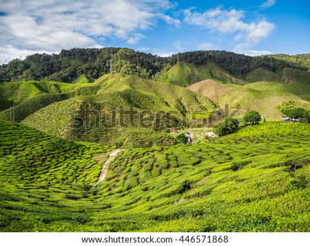 Tea plantation in the Cameron highlands, Malaysia - stock photo