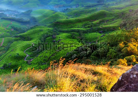 Tea plantation valley with fog early in the morning at sunrise. Munnar. Kerala. India - stock photo
