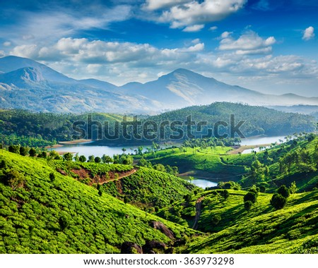 Tea plantations and Muthirappuzhayar River in hills near Munnar, Kerala, India - stock photo