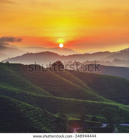 Tea Plantations at Cameron Highlands, Malaysia at the Sunrise.