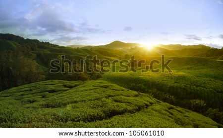 Tea Plantations at Cameron Highlands Malaysia. Sunrise in early morning with fog - stock photo