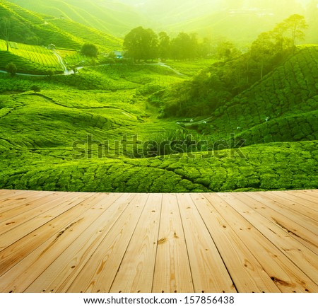 Tea Plantations at Cameron Highlands Malaysia, wood floor perspective. Sunrise in early morning with fog. - stock photo