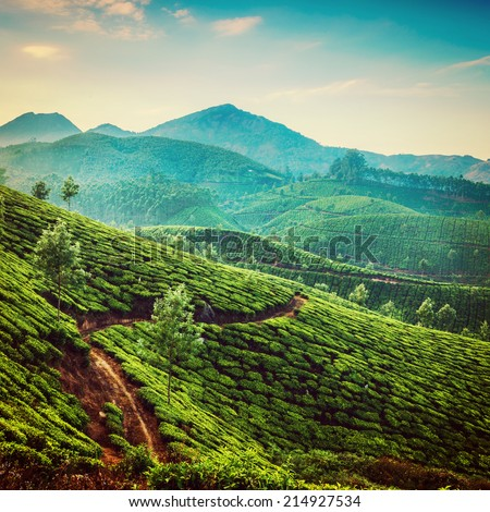 Tea plantations in state Kerala, India. instagram filter effect . - stock photo