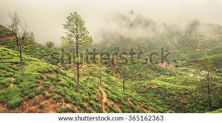 Tea plantations near Nuwara Eliya. Sri Lanka. Panorama