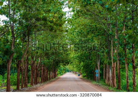 Teak forests on the rural road with environment green leaves, Thailand - stock photo