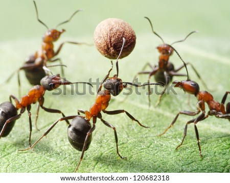 team of ants play volleyball with pepper seed - stock photo