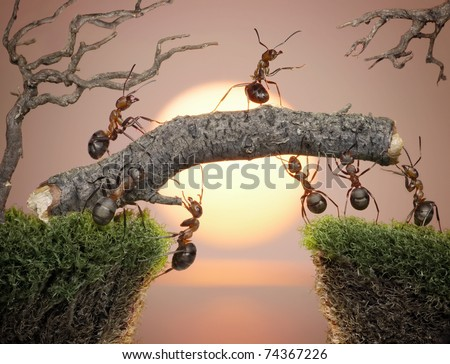 team of ants with chief constructing bridge over water on sunrise or sunset - stock photo