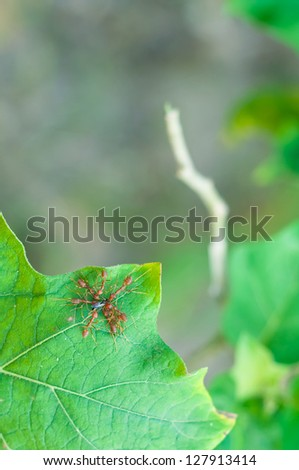 Team work, Ants - stock photo