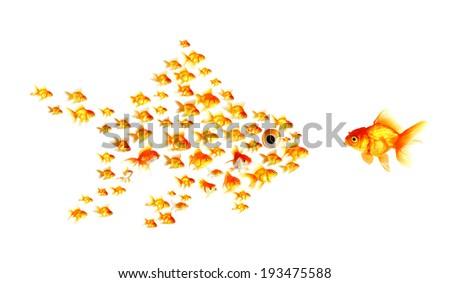 animal Grouping... Groupings Of Animals