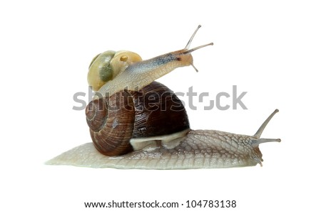 teamwork of two snails