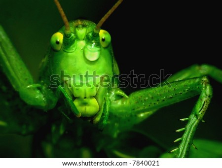 tear of beauty grasshopper after rain - stock photo