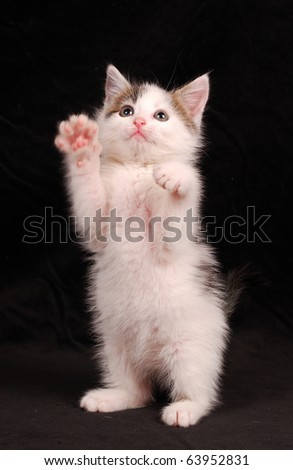tease a little kitten - stock photo