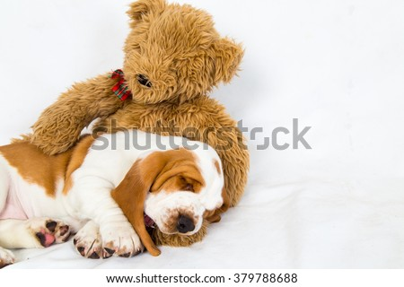 Teddy bear patting and comforting a sleeping basset hound puppy - stock photo