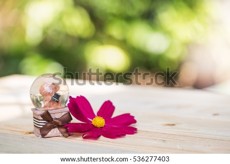 teddy bear snow globe with red cosmos flower on wooden board
