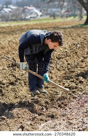 Teenager boy sowing potato tubers into the plowed soil - stock photo