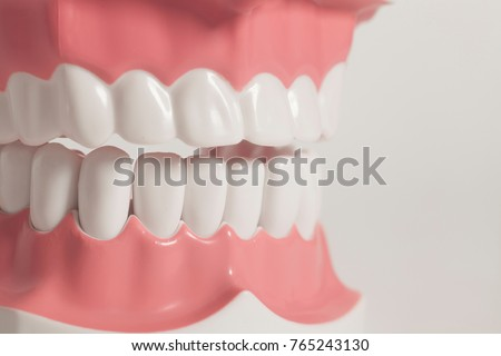 Teeth model isolated on white
