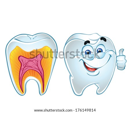 teeth smiling and teeth in section - stock photo