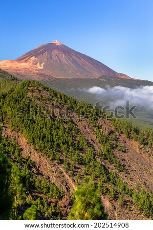 Teide volcano beyond a forest of pines in Tenerife, Spain. - stock photo