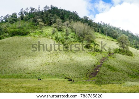 teletubbies hill and field located in tengger semeru bromo indonesia