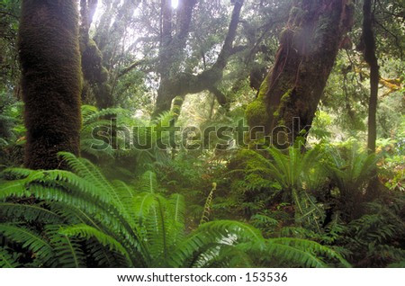 Temperate rainforest of Doubtful Sound, New Zealand