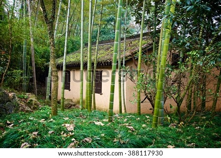 Temple in the Bamboo Forest - stock photo