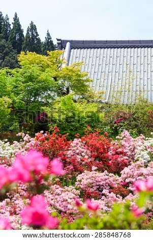 Temple roof beyond a field of flowers of Japanese Azalea - stock photo