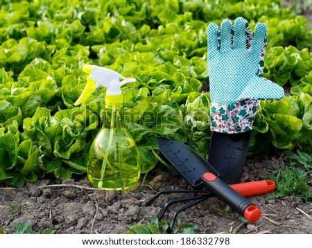 Tempting gardening work - colorful tools and salad bed.