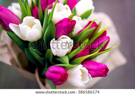 Ten white and ten pink tulips. The international Women's Day - on March 8. Tulips are laid out on a gray background in packing from paper.